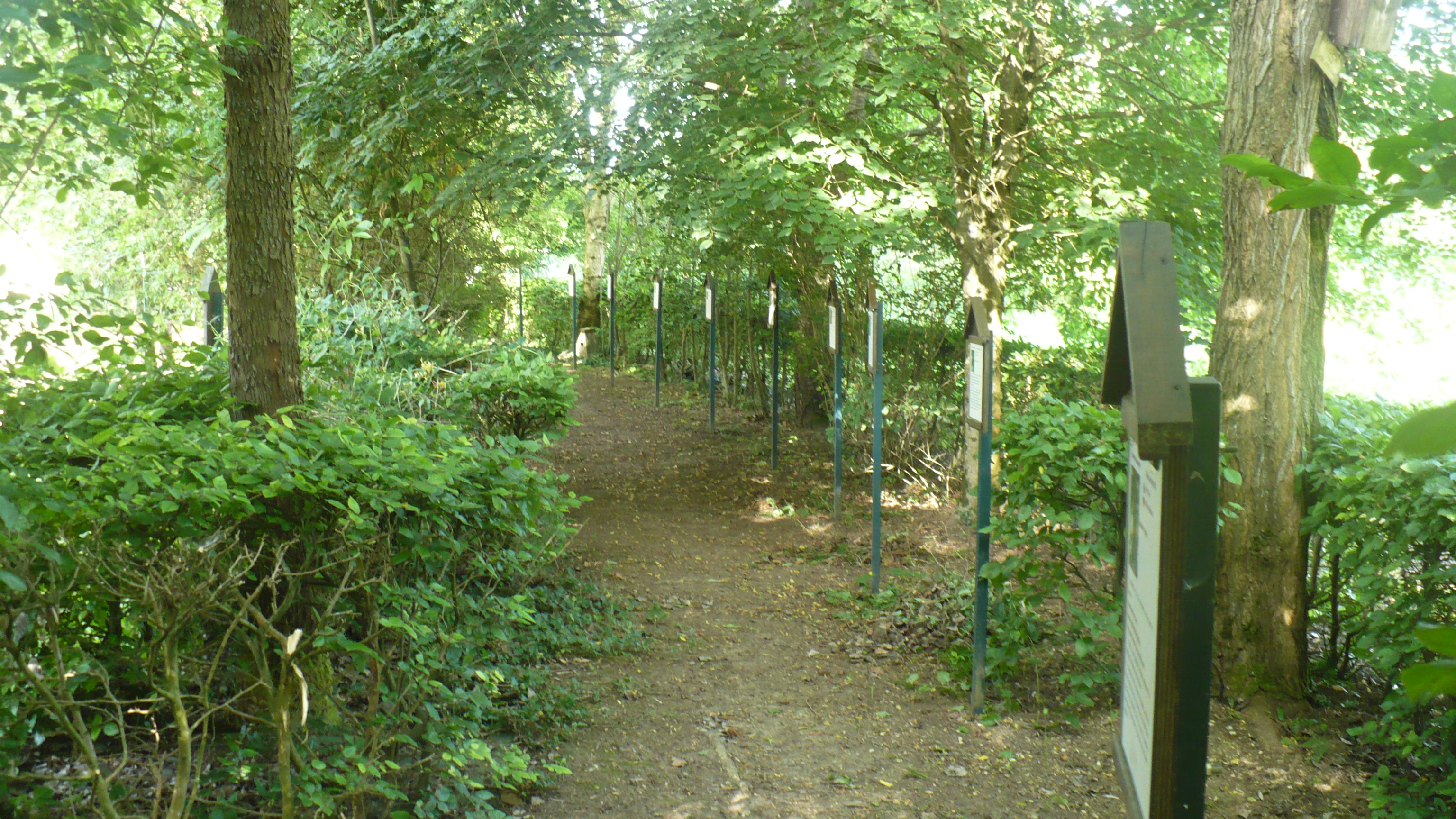 Dans la haie arboretum